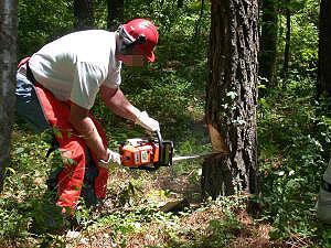 chainsaw-tree-felling.jpg