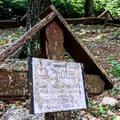 Katonai kedvencek temetője: Kutyatemető