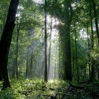 Hogyan működik az erdő? II. -Az élet anyahajói