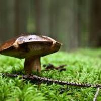 Hogyan működik az erdő? I.- Gombák nélkül nincs igazság