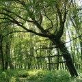 Faóriások nyomában : Avagy, hogyan kerülhet egy fa a Duna-partról egy mocsár szélére