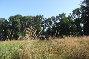 A Kozara szikes rétjei