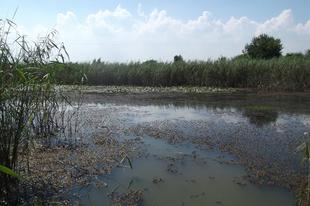 Egy elfeledett víz: a Banga