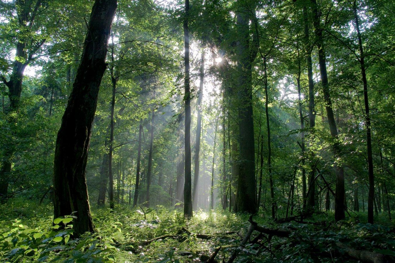 bialowieza_forest_c_tomasz_wilk_0.jpg