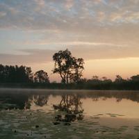 Hazajáró-A Duna mente vízivilága