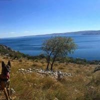 Kutyákat használnak régészeti leletek feltárására horvát archeológusok
