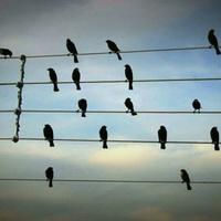 Hallgasd meg, hogy ülnek a madarak a dróton!