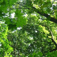 Bajorország: 30 millió fát ültetnek 5 év alatt