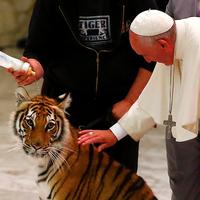 Akitől Ferenc pápa is fél