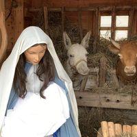 Felkapcsolták a vatikáni Szent Péter téri karácsonyfa fényeit, felavatták a betlehemet