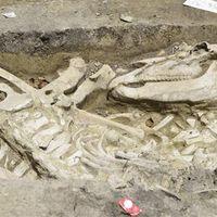 Avar kori fülkesírokat találtak Szegeden