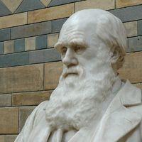 Ismét megnézhetjük Darwin mikroszkópját