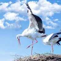 Több ezer fészektartóval várja az áramszolgáltató a gólyákat