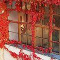 Egy kis tavasz az őszben: Várszegi Asztrik természetfotói