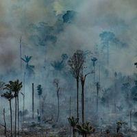 A latin-amerikai püspöki karok felhívása az Amazonas védelmére