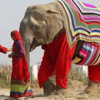 Meleg öltözetet kaptak az elefántok Indiában
