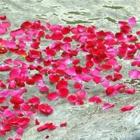 Virágszirmokkal búcsúztatják a Hableány kapitányát és matrózát