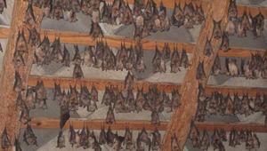 Denevérmúzeum nyílik egy magyar templomban