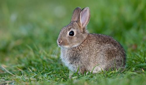 Nőtt a veszélyeztetett fajok száma, de van remény