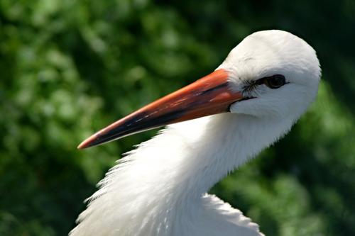 Megérkeztek Európába az első gólyák