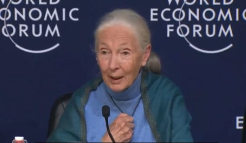 Hazánk is csatlakozik Jane Goodall nemzetközi faültetési akciójához