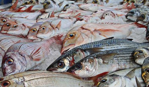 Drámai mértékben csökkent a halpopuláció az elmúlt évtizedekben