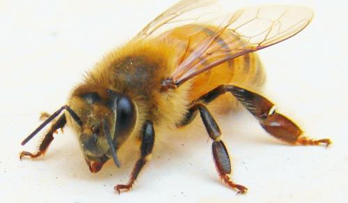 Ja, meg a méz...