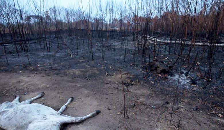 Így pusztít a tűz Dél-Amerikában (fotók, 16+)