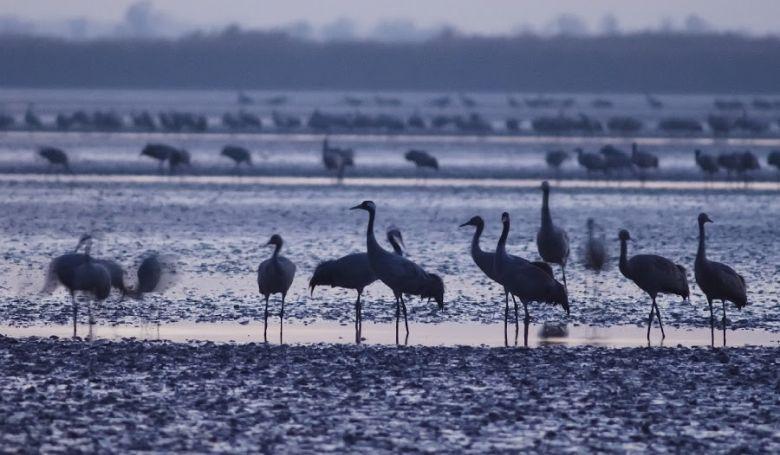 Daruleső túrák indulnak szombaton a Fehér-tó környékén