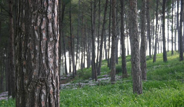 Erdőtelepítéssel a globális felmelegedés ellen