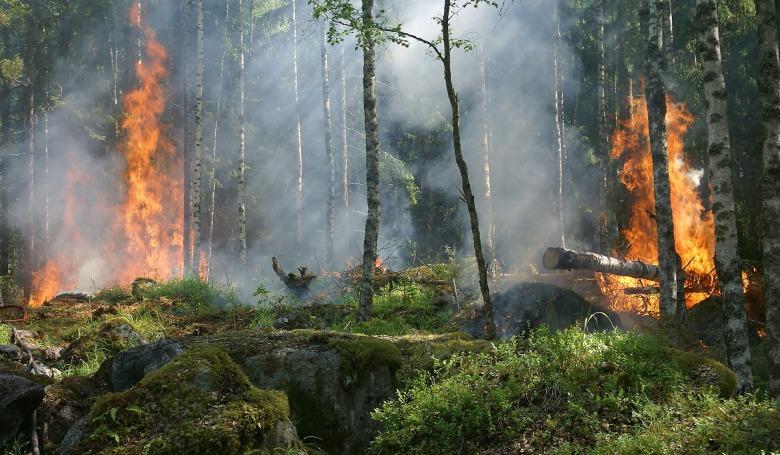 Már nem lángolnak a szibériai erdők