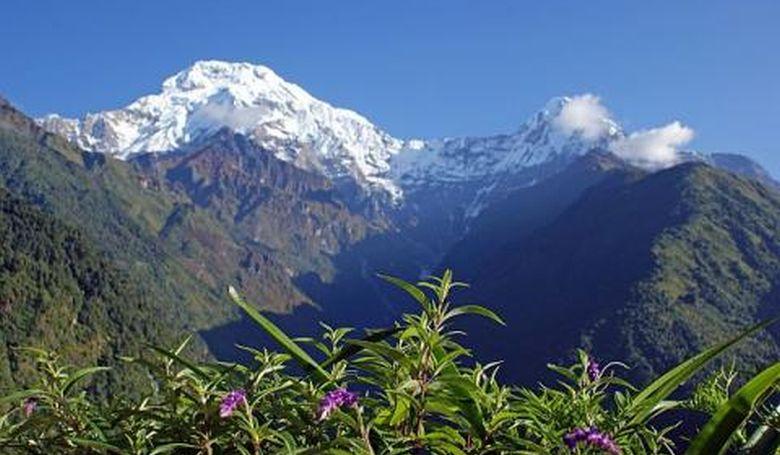 Egyre több növény él a Mount Everest térségében