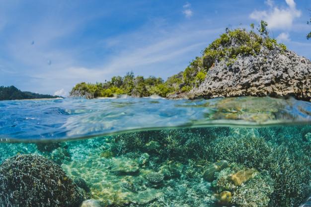 Új módszert javasolnak a kutatók a korallzátonyok pusztulásának megfékezésére