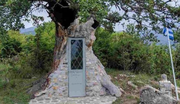 Megmentés másként: kápolna épült egy öreg fa belsejében