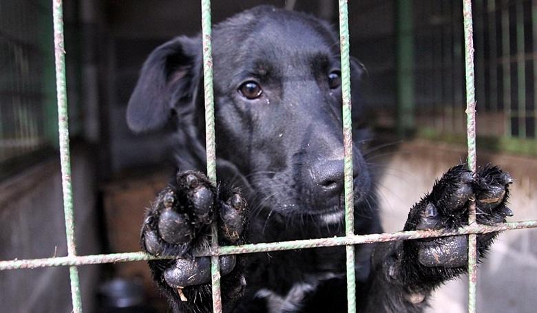 Gyűjtés a kutyamenhelyek számára