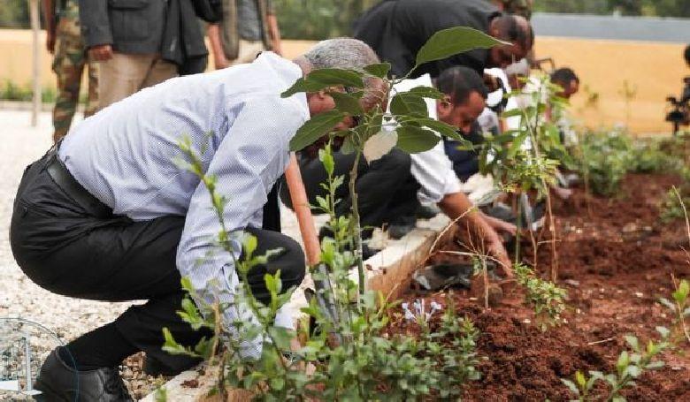 200 milliónál több fát ültettek egyetlen nap alatt Etiópiában