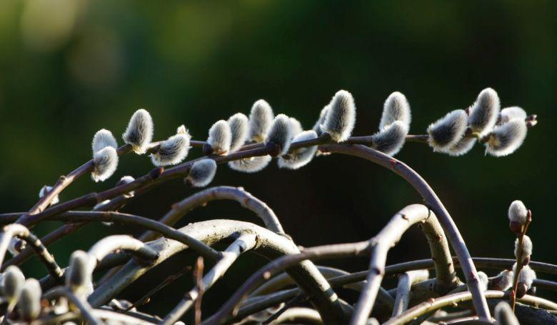 Virágvasárnappal megkezdődik a nagyhét - SZEMlélek
