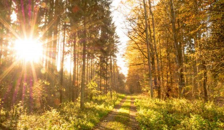 Erdővarázs Családi Nap lesz a Szabadság téren