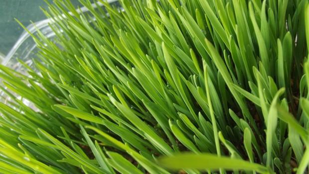 grass-965022_1920-620x349.jpg