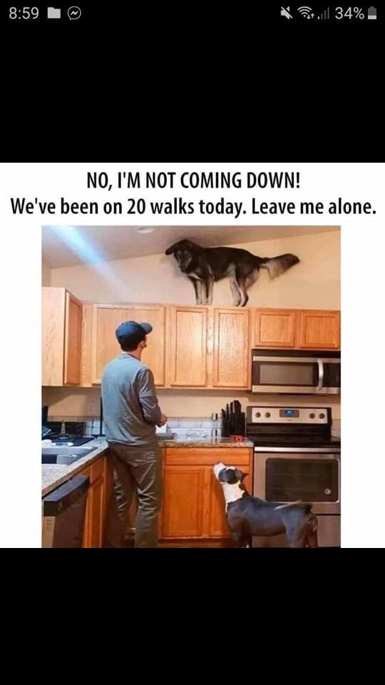 Nem, eszemben sincs lejönni! Ma már 20 alkalommal voltunk sétálni. Hagyj békén!
