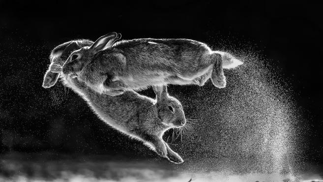 Daróczi Csaba 'Bunny jumping' című felvételét választották a 'Nature' kategória legjobbjának.