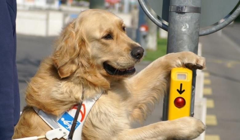 Ismertető kampány indul: kutyák - vakvezető, rohamjelző, terápiás... (videó)