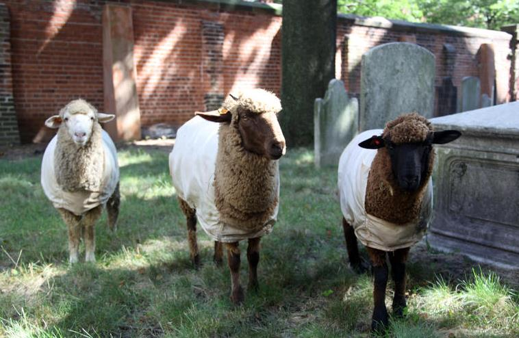 sheep-lambscaping-old-st-patrick-cathedral-mulberry-mott-street-nolita-nyc-6_1.jpg