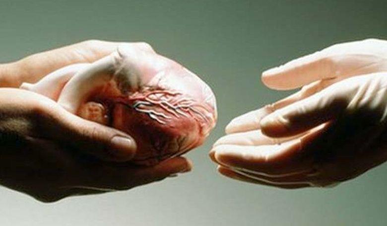 A szervátültetés a magyar egészségügy kiemelkedően sikeres területe