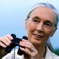 Higgy egy jobb világban! Interjú a Jane Goodall Intézet koordinátorával