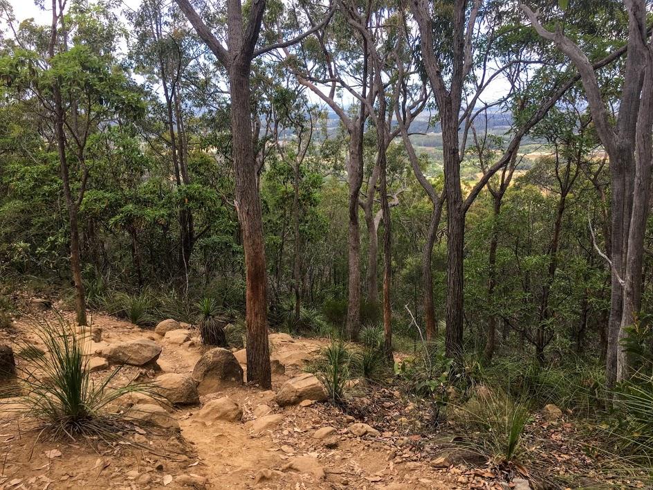 Felfelé az erdőben