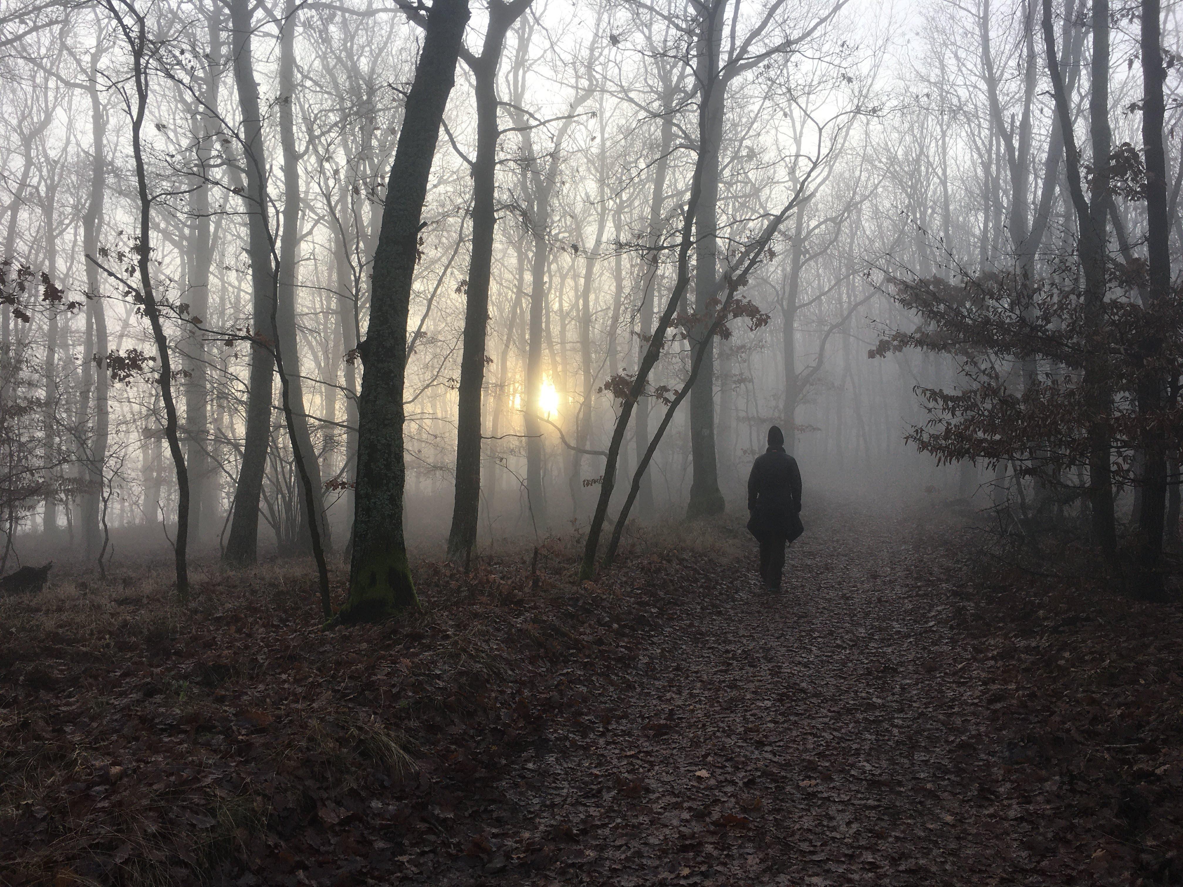 ködös kilátás)