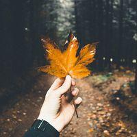 Kirándulós idő van, mára még engedjük el a teendőket!  #vasarnap #pihenés . . . . #beautycommunity #magyarig #instahun #szepsegcenter #sunscreen #fényvédelem #mutimitcsinalsz #ősz #kedvenc #jopihenest #autumnmood #ikozosseg #magyarinsta #magyarig