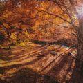 Csodás őszi nap ez a mai, használjátok ki! Fényvédő és irány a szabadba!