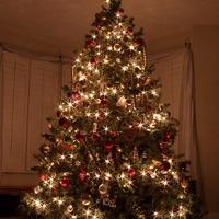 Karácsonyfa…. egész évben???
